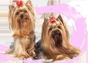 Продажа одежды для маленьких собак в интернет-магазине   Купить одежду для  собак недорого в Санкт-Петербурге   Little Dog e17325bbe66